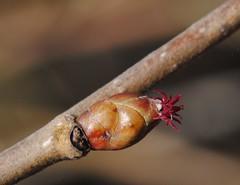 Spring just arrived ;-) - TROML - 1024 (Clint__Budd) Tags: macromondays