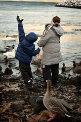 Snorri_Island_Vetur_2014-15-25.jpg (Sigrun Saemundsdottir) Tags: ocean winter white snow cold ice water birds animals frozen geese iceland outdoor feedingthebirds fowl chill birdfeeding snorri