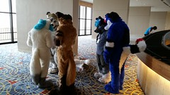 Dream Machine Photoshoot FWA 2015 - Shots by Lykanos (9) (Lykanos) Tags: furry photoshoot dreammachine fwa fwa2015 dmcostumes