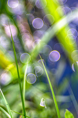2013-07-28-IMGP8038 (fraktalas) Tags: macro grass pentax bokeh bubble manualfocus k5 135mm wideopen f35 bubblebokeh beyondbokeh pentaxk5