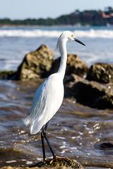 Bird on the rocks.