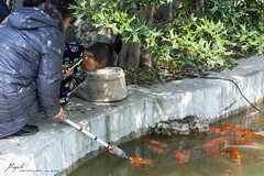 feeding the fishes (Jordi Pay Canals) Tags: china park orange lake fish canon eos is photo spring child feeding picture canals feed usm  jordi nanjing efs jiangsu    xuanwu  450d 1585mm pay