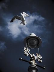 Flight Gull (grahambrown1965) Tags: blue light cloud seagulls bird nature lamp birds clouds 50mm pentax wildlife seagull gull gulls lamps k10d pentaxk10d smcpfa50mmf14 smcpentaxfa50mmf14 justpentax pentaxart