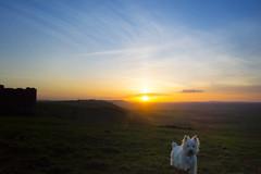 Devils Dyke_6 (Pompey Photo Bunny) Tags: sunset dog brighton devils terrier highland dyke