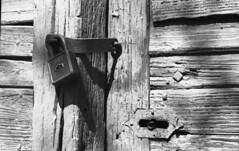 original Tuto (.e.e.e.) Tags: door film analog vineyard lock explore m42 analogue filmscan carlzeiss winecellars pancolar1850 prakticamtl50 villánykövesd villánywineregion kodakd7611developer epsonv350photoscanner délbaranya