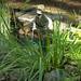 Huntsville Botanical Garden 09-05-2014 40
