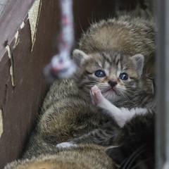 20160429_PhotographyPractice_0052_5x5 (Creativeleigh Shot...by LeighAnneD) Tags: cats cat feline outdoor kittens neighborhood litter felines