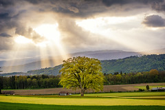 Rays of Light (NIOphoto.) Tags: light sunset sky cloud sun mountains tree green field clouds forest landscape schweiz switzerland ray jura rays sunrays baum seeland lighrays