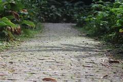 A tropical rainforest in Rio de Janeiro, Brazil (eltpics) Tags: brazil stone riodejaneiro rainforest path bricks tropical footpath eltpics