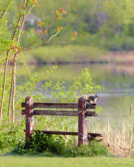 Just Another Lonely Squirrel in Town (DaveLawler) Tags: nature sunrise bench rodent pond squirrel newengland salisbury wpi worcester institutepark wpiedu