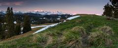 First (Brunzolini) Tags: morning schnee trees mountain snow alps tree green sunrise schweiz switzerland weide mood meadow first berge gras grn alpen alp sonnenaufgang eiger berner boreal jungfrau mnch obwalden morgenstimmung voralpen bergkette alpnach