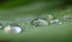 After The Rain (Matthi900) Tags: water drops leave blatt wassertropfen canon macro 100mmf28 eos7dmkii