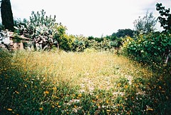 summer sunshine on elite chrome (haribogreen) Tags: colour green film nature beauty 35mm landscape countryside lomo lca xpro lomography saturated kodak crossprocess analogue elitechrome mallorca vignette brightcolour filmisnotdead believeinfilm