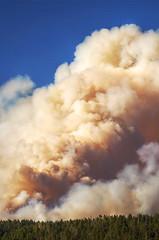 DSC_0349 fire hdr 850 (guine) Tags: grandcanyon grandcanyonnationalpark canyon northrim fire smoke fullerfire trees plants hdr qtpfsgui luminance