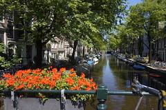 Las flores (mati-hari) Tags: flores sol rio canal verano holanda barcas bicicletas msterdam