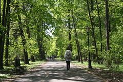 Follow the path (Alexis_Ramah) Tags: canon eos350d 350d pszczyna poland pl polska nature parc park path forest alone walk girl woman polish