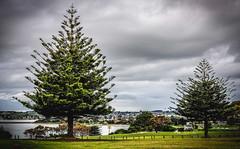 Devonport From Bluff (paulledger81) Tags: devonport tasmania australia bluff norfolkislandpine