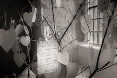 Remembering... (AJFpicturestore) Tags: cornwall gunwalloe stwinwaloe churchcove light church churchwindow message remembering monochrome monochromemonday hmm alanfoster blackwhite