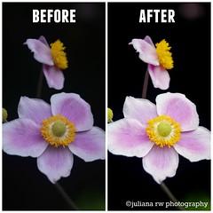 BeforeAfter3 (Juliana RW) Tags: flowers