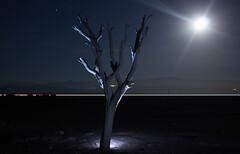 Naturaleza Nocturna (por poper`s) Tags: naturaleza arbol noche estrellas luna cielo iquique chile pampa