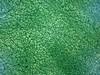 BLUE6587 (David J. Thomas) Tags: arkansas microbiology batesville cyanobacteria terraforming lyoncollege ecopoeisis planetaryengineering techshot davidjthomas marssimulator plectonemaboryanumutex485