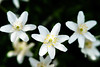 ∵ (Sicong (OFF for a while)) Tags: flower dof bokeh sony jardindesplantes a6000 sal135f18za sonnart18135