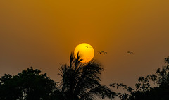 Sunset from roof top at my home ...:) (Debajyoti M) Tags: sunset india nature birds wow westbengal autofocus tropicalbirds flickrlover naturalcolours indianbirds santiniketan flickrlovers d5100 nikond5100
