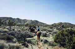 Joshua Tree Frannie (chillbay) Tags: california horse desert palmsprings joshuatree ricoh ricohgr palmdesert