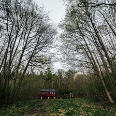 The cabin the woods (Aredaphotography) Tags: trees nature norway forest square norge moss cabin woods sony natur a7 14mm refsnes samyang aredaphotography refsnesstranda