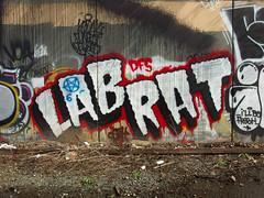 Lab Rat (cnmehring) Tags: seattle streetart graffiti labrat