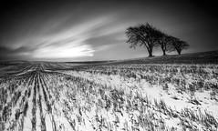 Winter's last throw? (8/50) (Stuart Stevenson) Tags: uk photography scotland clydevalley stuartstevenson longexposuretreesblackwhite
