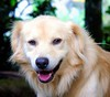 #One #Smile  Explore #01 11.20.2014 (roizroiz) Tags: trip pets dogs smile animal animals one photo interestingness pic 01 perros doggy yesterday mascotas picoftheday explored i500 bigpersonality interesantísimo 20141120 puppypupcuteeyesgoodpetpetsanimalanimalspetstagrampetsagramdogsittingphotoofthedaydogsofinstagramilovemydognatureflickrdogsdogofthedaylovedogslovepuppieshoundadorabledogloverpuppyi