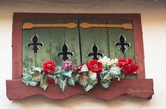 Renaissance window 8755PatLam (Studio5301) Tags: costumes festival kids children drums kilt bellydancer drummer faire clan renaissancefaire chld arizonarenaissancefestival fairycostumes studio5301 festivalsinphoenix patricialam patricialamphotographycom