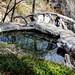 Carlito Spring pool