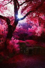 (Blurmageddon) Tags: california film 35mm minolta kodak malibu infrared aerochrome istillshootfilm srtmc shootfilmnotmegapixels