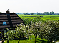 Holland (Eduard van Bergen) Tags: life family trees houses ladies girls light holland art nature water netherlands dutch field grass cheese rural boer landscape outside living shoes cattle cows sheep boots wind blossom outdoor earth sony horizon farming cottage nederland meadows sigma ground rubber apron soil land vista wife suburb vee farmer agriculture alpha dairy frau grassland polder bas plain pays bloesem antje olanda buiten khe leven niederlande koeien schapen overall klompen gezin cultivated hubbie ilce zuivel boerin liesveld molenwaard