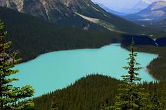 Peyto Lake, Banff National Park, Alberta, Canada (Nitish_Bhardwaj) Tags: lake canada alberta banff banffnationalpark peytolake peyto