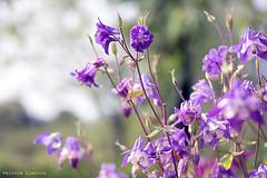 L1008696 (LaBonVampire) Tags: leica flowers nature zeiss carlzeiss zm leicam8 teletessart485 teletessar85