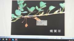 DSC07551 (yongheecs永和社大生態保育社) Tags: 林場