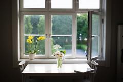 window (samovaren) Tags: window windowsill 50mmf18 d600