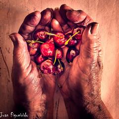 Un Puado de Cerezas (Juan Figueirido) Tags: hands cherries manos textures wrinkles texturas handful cerezas arrugas puado fz1000 juanfigueirido