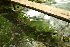 bridge over water (dorin tudori) Tags: bridge water spring wasser outdoor romania apa primavara rumanien carasseverin ochiul beului