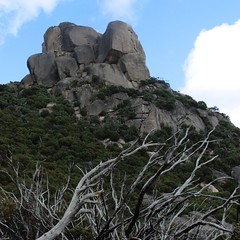 Mount Buffalo National Park (ydcheow87) Tags: park trees nature nationalpark buffalo scenery australia melbourne mount oceania deadtrees