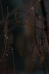 Comunicazioni (gaddi_luca) Tags: alba semi rugiada luce filo riflesso nocciolo