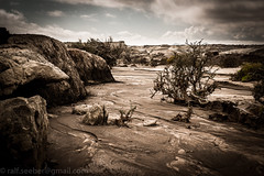 """""""Of all the paths you take in life, make sure a few of them are dirt."""" John Muir (See-be-r Photography) Tags: argentina landscape desert sanjuan deadtree riverbed valledelaluna sones breathtakinglandscapes"""