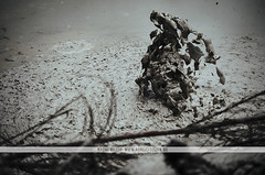Geothermal Mud Pools - Rotorua (Naomi Rahim (thanks for 2 million hits)) Tags: rotorua newzealand nz northisland 2016 mudpools mud nature landscape travel travelphotography whakarewarewa geothermal waiotapu ground wanderlust surreal boiling pool volcanic