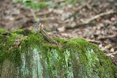 _DSC5860 (Joe Nathan78) Tags: nikon 80200mm d700 nature animal squirel