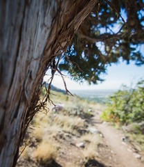 The cedar tree (videopelli2010) Tags: mountain bike utah ogden bonnevilleshorlinetrail