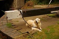 1295-01L (Lozarithm) Tags: aylesbury bucks canals guc dogs pets pentaxzoom k1 28105 hdpdfa28105mmf3556eddcwr