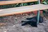Black Cat (matteo.vannacci) Tags: gatto nero gattonero blackcat cat black